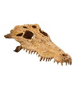EXO TERRA Crocodile Skull czaszka krokodyla